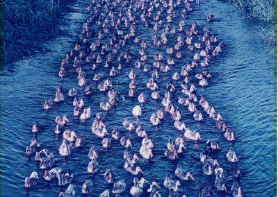 Bryne-ducks-original-700x